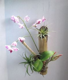Bamboo Hanger with Orchid Air Plant Vanilla Orchid, Orchid Arrangements, Orchids Garden, Orchid Care, Air Plants, Container Gardening, Flower Designs, Garden Design, Cactus
