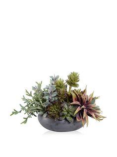 55% OFF New Growth Designs Faux Succulent Garden