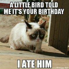 Grumpy cat funny, grumpy cat humor, grumpy cat meme, sarcastic funny, grouchy cat …For more funny quotes and hilarious images visit www. Grumpy Cat Quotes, Funny Grumpy Cat Memes, Funny Animal Jokes, Animal Memes, Funny Cats, Funny Animals, Funny Horses, Cat Happy Birthday Meme, Grumpy Cat Birthday