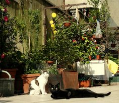 courtyard cats | Recent Photos The Commons Getty Collection Galleries World Map App ...