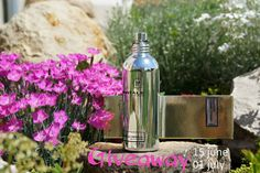 Beauty Unearthly: Montale Vanille Absolu Giveaway