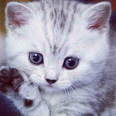 #gatito #kitten #gato #fotografia #gatos