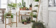 Ikea plant stands from £25, ideal for a small conservatory