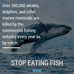 For the whales, dolphins, sharks, tuna and every other creature in our suffering sea, go vegan Mercy For Animals, Why Vegan, Environmentalist, Environmental Issues, Stop Eating, Animal Welfare, Animal Rights, Going Vegan, Marine Life