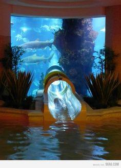 what's this? aquarium water slide? genius.