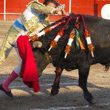 http://wspa-usa.org/latestnews/2012/Bullfighting-success-Bogota.aspx