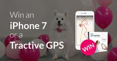 Join and win an iPhone 7 or a Tractive GPS dog tracker!