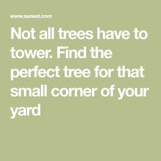 Not all trees have to tower. Find the perfect tree for that small corner of your yard