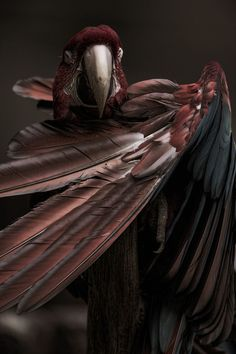 Outstretched wings of a Macaw Parrot Pretty Birds, Love Birds, Beautiful Birds, Animals Beautiful, Animals And Pets, Cute Animals, Macao, Its A Mans World, Tier Fotos