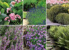 Pour entourer, border ou séparer, adoptez des plantes à longue floraison, à feuillage persistant pour leur goût, parfum, nectar ou feuillage. Géranium, santo...