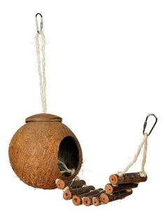 Coconut Shell Hideaway with Ladder by Prevue Pet