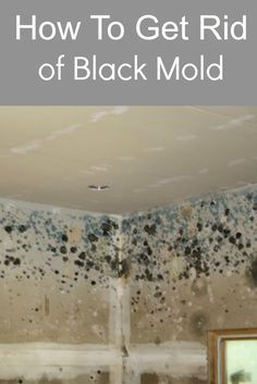185 best black toxic mold images on pinterest cleaning mold toxic rh pinterest com