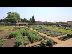 The Kitchen Garden at Hampton Court Palace - YouTube