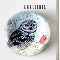 Owl Glass Paperweight from Z Gallerie  I want this little owl.