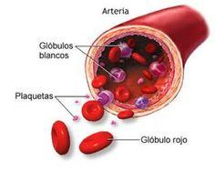 Plaquetas: http://cienciasnaturales.carpetapedagogica.com/2012/10/plaquetas.html