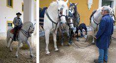 Den Andalusiske Rideskole - backstage
