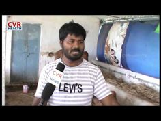 Software Engineer turns to a Dairy Farmer : Mahbubnagar | Special Story ...
