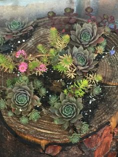 Stump pot after misting oh water .., never over water your succulent
