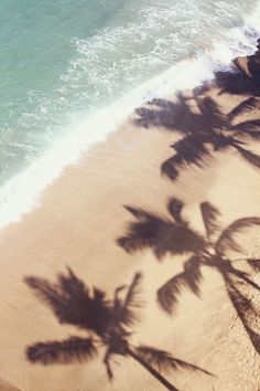Palm shadows.