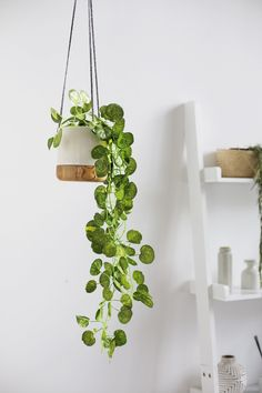 100 Beautiful Hanging Plant Stand Ideas Here Are Tips On How To Decorate It DIY: Plant hanger The 10 Best Indoor Hanging Plants to Turn Your Home Into a Jungle Foliage Plants - Indoor House Plants Fake Plants Decor, House Plants Decor, Ikea Fake Plants, Indoor Hanging Plants, Hanging Planters, Decorating With Fake Plants, Decorate With Plants Indoors, Bedroom With Plants, Living Room Plants Decor