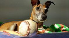 Warten auf Sonntag. #Baseball #MVBL #ROSTOCK #SCHWERIN #Hund