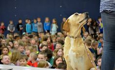 A three-legged rescue dog teaches children around the country about courage and loving yourself just the way you are.