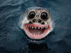 This hybrid of a shark and a spider manages to be both cute and terrifying. (Caters)