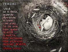 Cidinha Soares - PERDAS