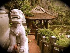 dog guarding the Temple Tam Coc Vietnam
