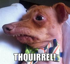 You HAVE to say it out loud while looking at his face, makes it that much more funny :D THQUIRREL!