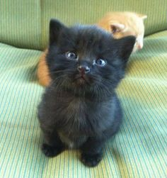 We haven't had a black kitty pic for a while so when I saw this little fella I knew it was the one…….isn't he adorable?