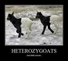 science memes | science memes | Tumblr <-- awesome way for me to remember this for anthropology