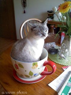 This looks just like my cat.. minus the giant cup in which to loll and be lazy.