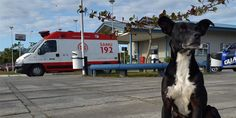 Cachorro espera o retorno do dono falecido há meses do lado de fora do hospital