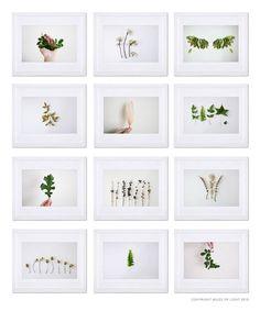Indoor Garden N8 - 8x10 print. Fine Art Photographic Natural History Print. Minimal style. Natural Home Decor. Indoor garden botanical