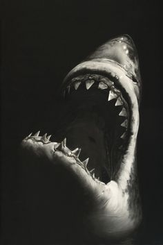 Robert Longo, Untitled (Shark 7) 2008 You'd be forgiven for thinking that this photorealist charcoal drawing by Robert Longo was a photograph of a great white. / https://www.barnebys.com/blog/article/9056/?utm_source=Newsletter+en_US&utm_campaign=0dd80afb04-EMAIL_CAMPAIGN_2016_11_29&utm_medium=email&utm_term=0_dd36bfa54f-0dd80afb04-174905213