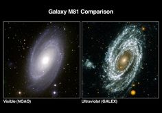 """Spiral galaxy M81. In visible light the nucleus is a pale yellow, showing it's made up of older stars, and the bluish tinge to the arms shows active star formation there. UV emphasizes the spiral arms, but this GALEX image is stunning. Not only are the spiral arms well defined, but off to the left a small galaxy which is almost invisible in the optical - and it's also showing active star formation. ©Mona Evans, """"Astrofest 2013"""" http://www.bellaonline.com/articles/art179665.asp"""