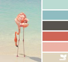 Design Seeds® | for all who ❤ color | flamingo hues