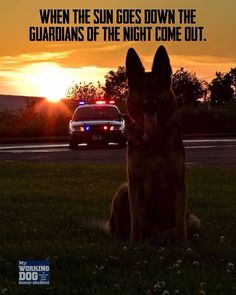 When the sun goes down the guardians of the night come out. Military Working Dogs, Military Dogs, Police Dogs, Military Photos, Police Wife Life, Police Lives Matter, Leo Love, German Shepherd Dogs, German Shepherds