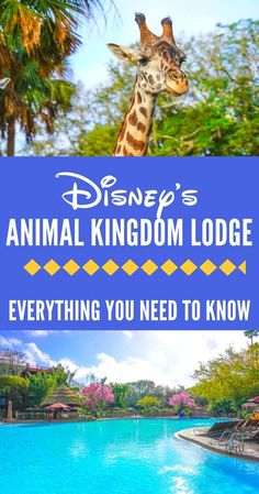 The ultimate guide to Disney's Animal Kingdom Lodge and Theme Park: the best rooms, rides, restaurants, and VIP experiences. Learn the best tips to get on the new Pandora rides and which Disney dining reservations to book.