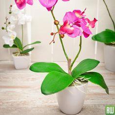 Eure Orchidee Hat Schlaffe Blätter In Diesem Blogbeitrag Erfahrt
