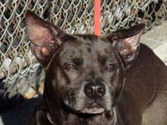 Executed on 5/4/13. Manhattan Center. PRINCESS' animal ID # was A0963705. She was an eight-year-old black pit bull mix. .