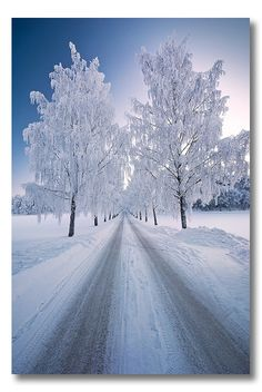 Winter road, trees, snow, beauty of Nature, photo Winter Szenen, Winter Love, Winter Magic, Winter White, Snow White, Snowy Day, Snow Scenes, Winter Pictures, Winter Beauty
