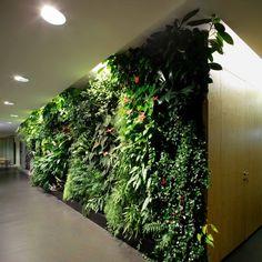 Fondation Nicolas Hulot - Green wall!