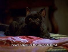 The 40 Greatest Things Ever Said By Salem TheCat