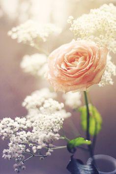 la petit fleur amour