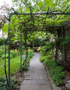 Jardin simple et verdoyant
