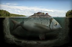 Fishy island - Erik Johansson surreal photographer