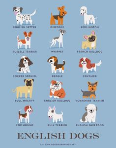 English dog breeds.  https://www.etsy.com/ca/shop/doggiedrawings?section_id=7450251