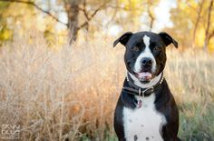 Content Ideas for your Pet Photography Blog- Guest Post